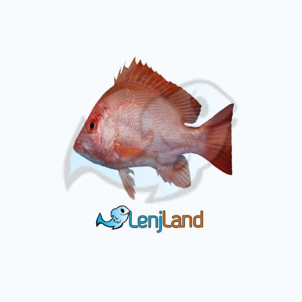 خرید ماهی سرخو، ارزش غذایی و خواص ماهی سرخو