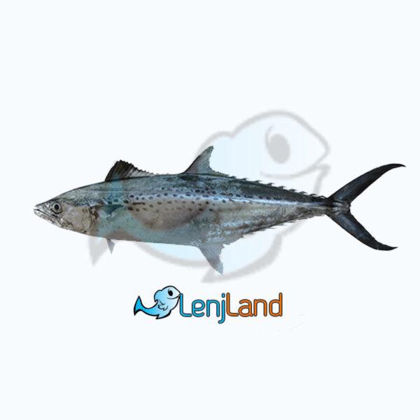 خرید ماهی قباد از لنج لند