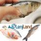 علائم و نشانه های ماهی تازه نسبت به ماهی کهنه
