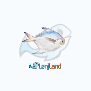 خرید ماهی حلوا سفید، فواید، ارزش غذایی و نحوه پخت ماهی حلوا سفید