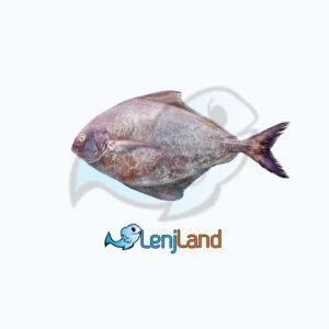 خرید ماهی حلوا سیاه، خواص و ارزش غذایی ماهی حلوا سیاه