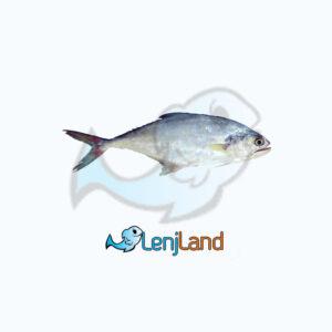 خرید ماهی سارم، فواید، ارزش غذایی و نحوه پخت ماهی سارم