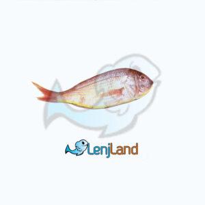 خرید ماهی سلطان ابراهیم، ارزش های غذایی، نحوه طبخ و قیمت ماهی سلطان ابراهیم