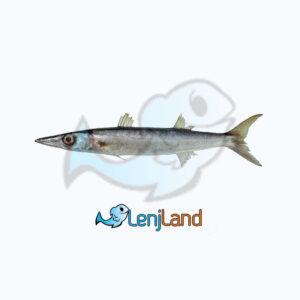 خرید ماهی شورت، ارزش غذایی، نحوه طبخ و قیمت ماهی شورت
