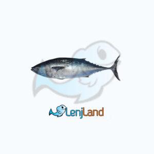 خرید ماهی هوور، ارزش غذایی، نحوه طبخ و قیمت ماهی هوور