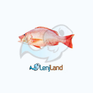 خرید ماهی چمن، ارزش غذایی خواص و قیمت ماهی چمن