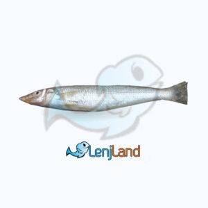 خرید ماهی کوتر، فواید، ارزش غذایی و نحوه پخت ماهی کوتر