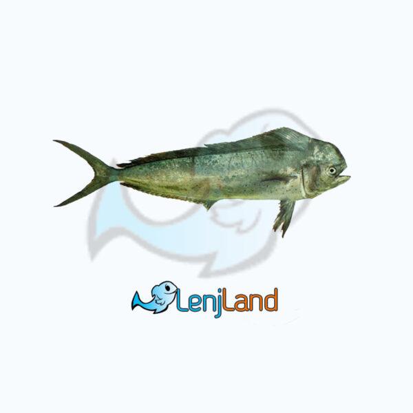 خرید ماهی گالیت، ارزش های غذایی، نحوه طبخ و قیمت ماهی گالیت