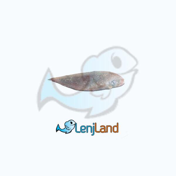 خرید ماهی زبان - قیمت ماهی زبان