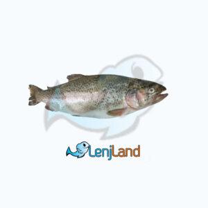 خرید ماهی سالمون - نحوه پخت ماهی سالمون و قیمت ماهی سالمون