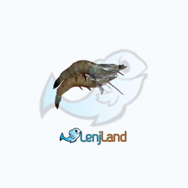 خرید میگو سرتیز، آشنایی با زیستگاه و قیمت میگو سرتیز در لنج لند